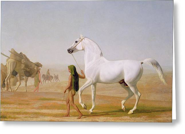 Gray Horse Greeting Cards - The Wellesley Grey Arabian led through the Desert Greeting Card by Jacques-Laurent Agasse