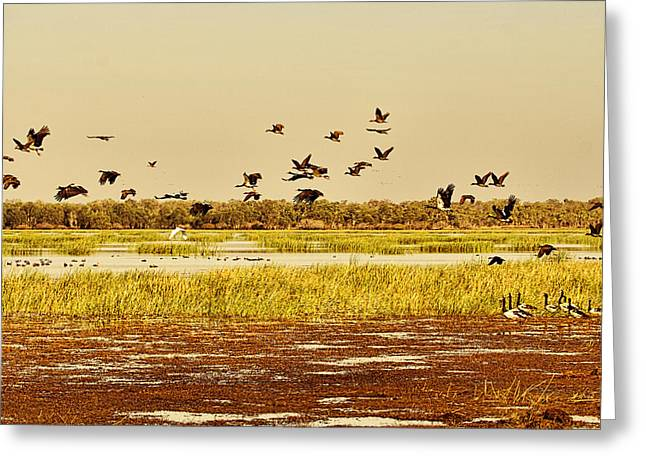 Top-end Greeting Cards - The Wetlands Greeting Card by Douglas Barnard