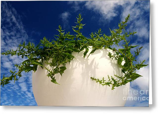 White Bowl Greeting Cards - The White Bowl Greeting Card by Rob Hawkins