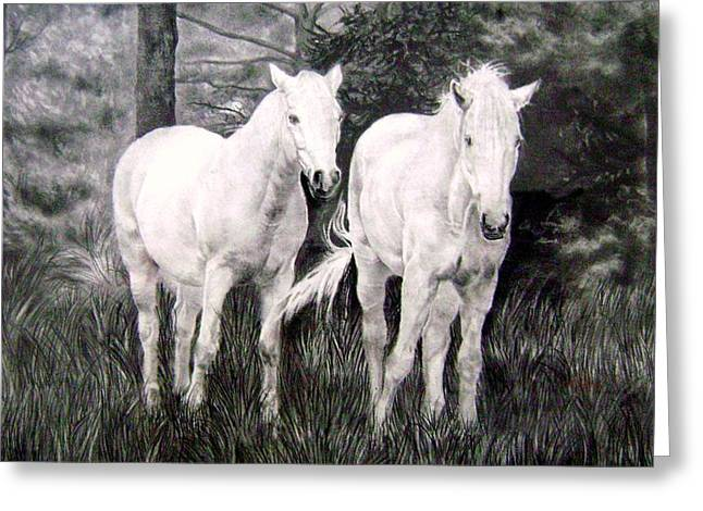 Wild Life Drawings Greeting Cards - The White Stallions Greeting Card by Mickey Raina
