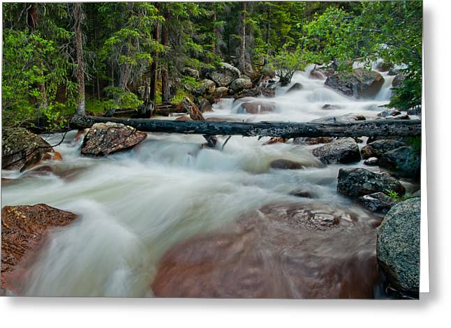 Water Greeting Cards Greeting Cards - The Wisdom of the Woods Greeting Card by Tim Reaves