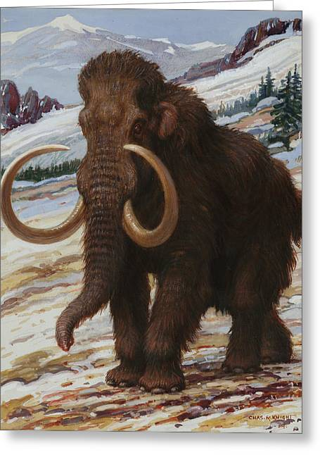 Characters And Scenes In History And The Arts Greeting Cards - The Woolly Mammoth Is A Close Relative Greeting Card by Charles R. Knight