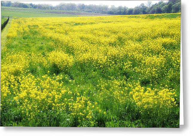 Erdenheim Farm Greeting Cards - The Yellow pasture Greeting Card by Bill Cannon