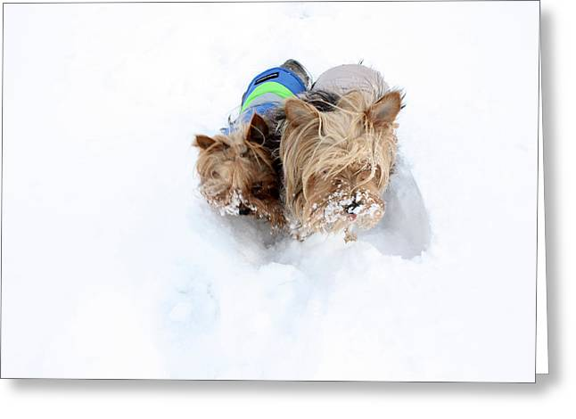 Puppies Photographs Greeting Cards - The Yorks Greeting Card by David Bearden