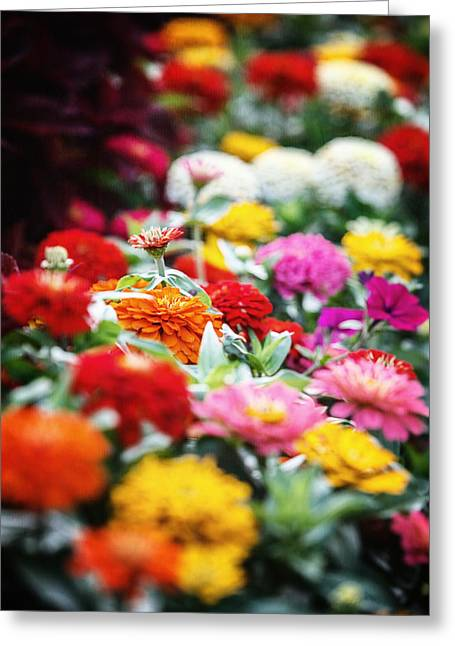 Zinnias Greeting Cards - The Zinnia Garden Greeting Card by Lisa Russo