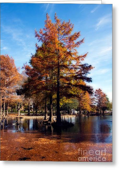 Theta Greeting Cards - Theta Pond Greeting Card by Lana Trussell