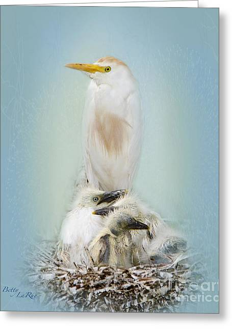 Cattle Egret Greeting Cards - They Have My Nose Greeting Card by Betty LaRue