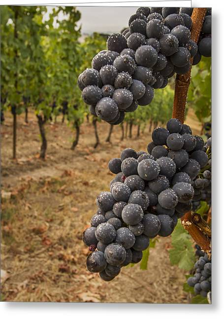 Purple Grapes Greeting Cards - They stand alone Greeting Card by Jean Noren