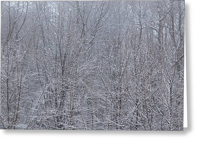 Snowy Day Greeting Cards - Thick Greeting Card by Gabriela Insuratelu