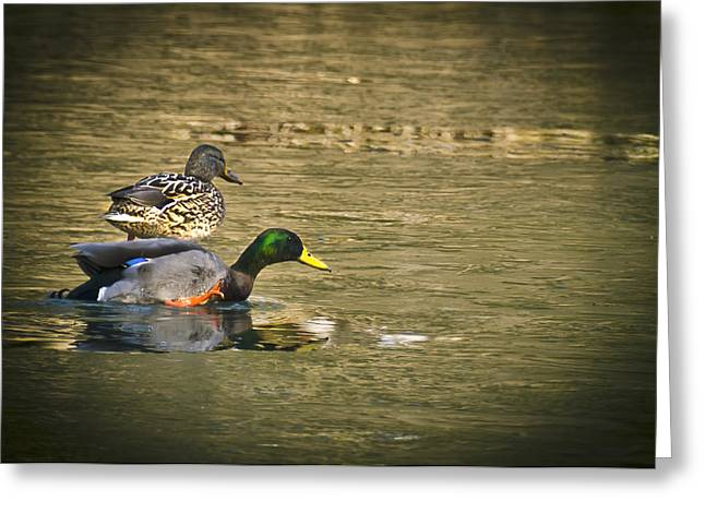 Nature Center Pond Greeting Cards - Thin Ice Wet Duck Greeting Card by LeeAnn McLaneGoetz McLaneGoetzStudioLLCcom