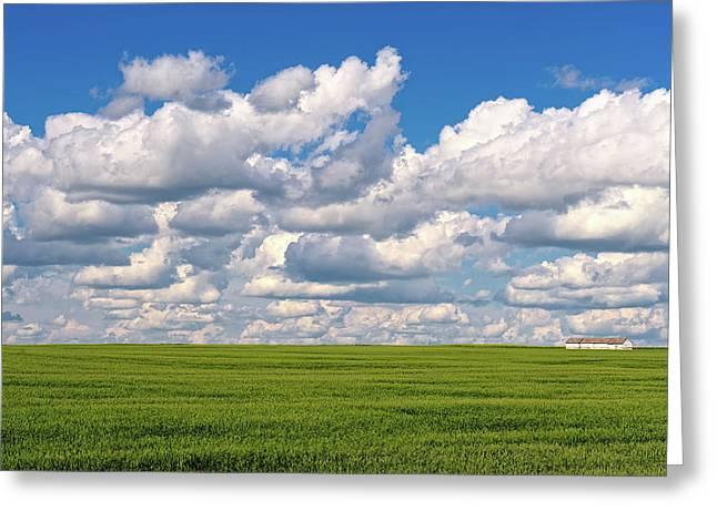 Alberta Prairie Landscape Greeting Cards - This is Alberta No.13 - Prairie Crops Greeting Card by Paul W Sharpe Aka Wizard of Wonders