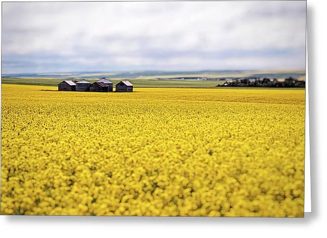 Alberta Prairie Landscape Greeting Cards - This is Alberta No.15W - Five Prairie Barns Greeting Card by Paul W Sharpe Aka Wizard of Wonders