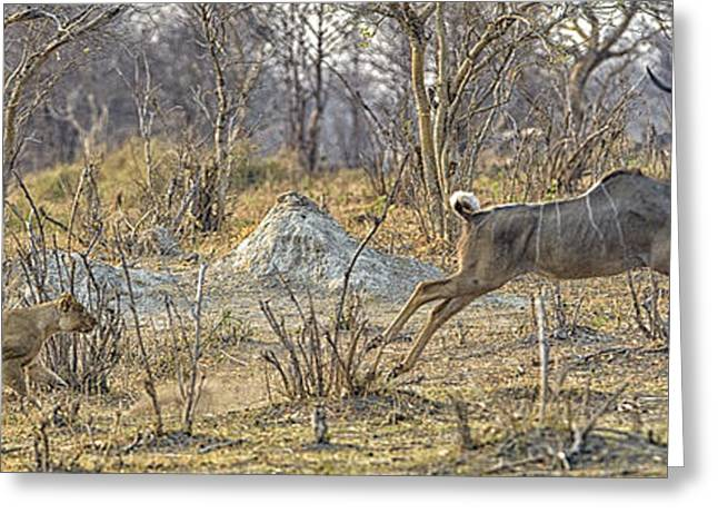 Lions Greeting Cards - This is Botswana No.  1 - Kudu Chase Greeting Card by Paul W Sharpe Aka Wizard of Wonders