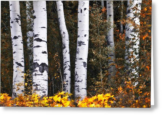 Merrit Greeting Cards - This is British Columbia 17 - The Aspen Forest Greeting Card by Paul W Sharpe Aka Wizard of Wonders