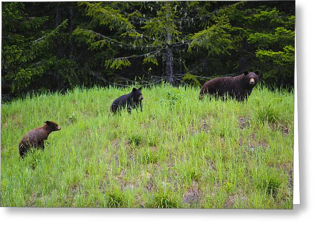 Three Bears Greeting Cards - This is British Columbia No.50 - Black Bear Mother and Cubs Greeting Card by Paul W Sharpe Aka Wizard of Wonders