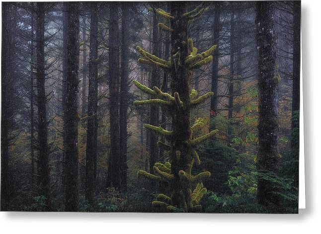 Red Cedar Greeting Cards - This is British Columbia No.54 - Misty Mystical Moss Forest II Greeting Card by Paul W Sharpe Aka Wizard of Wonders