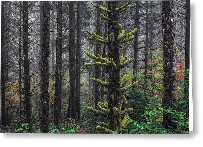 Red Cedar Greeting Cards - This is British Columbia No.54F - Misty Mystical Moss Forest III Greeting Card by Paul W Sharpe Aka Wizard of Wonders