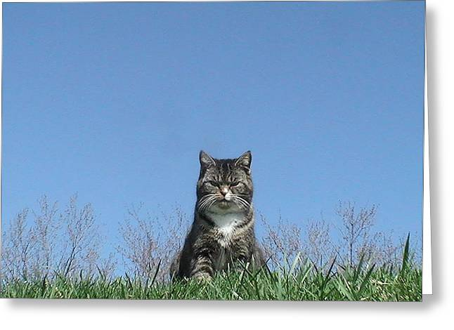 Take The High Road Greeting Cards - This Is My Happy Face Greeting Card by Pat Nalls