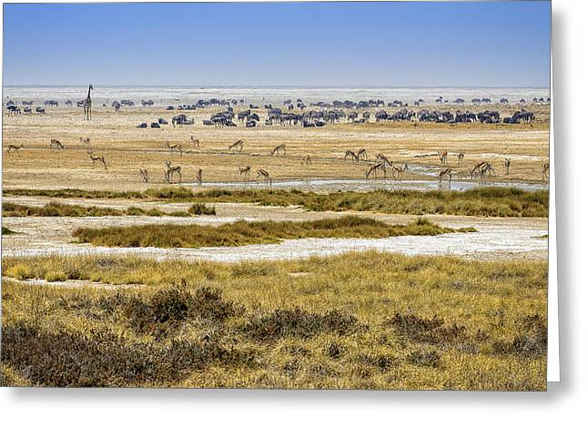 Dry Lake Greeting Cards - This is Namibia No.  1 - Waterhole at Etosha Pan Greeting Card by Paul W Sharpe Aka Wizard of Wonders