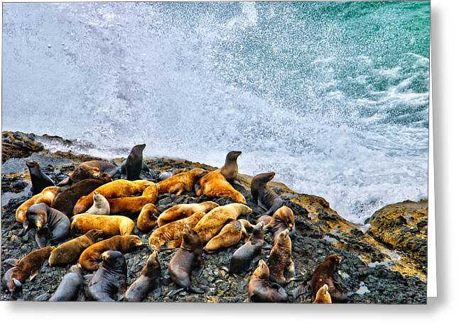 Sea Lions Greeting Cards - This is Oregon State No.18 - Sea Lion Splash Greeting Card by Paul W Sharpe Aka Wizard of Wonders
