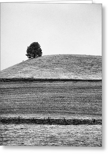 Wite Greeting Cards - This is Washington State No. 10B - Palouse One Tree Hill Greeting Card by Paul W Sharpe Aka Wizard of Wonders