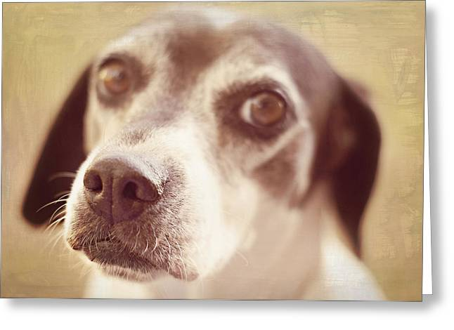 Olive Drab Greeting Cards - This Nose Knows Greeting Card by Susan Bordelon