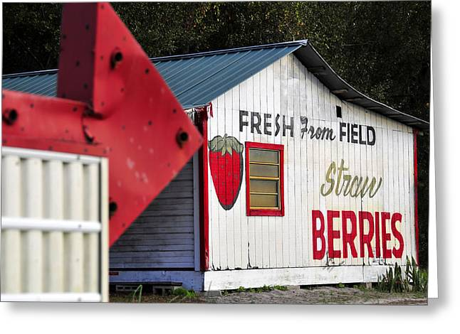 Shed Photographs Greeting Cards - This way for Strawberries Greeting Card by David Lee Thompson
