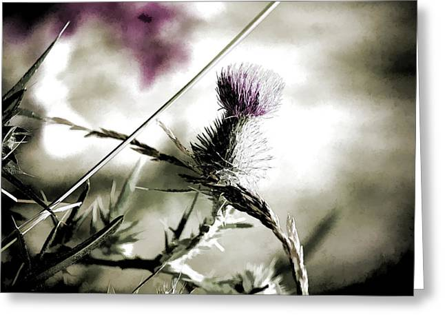 Soft Light Mixed Media Greeting Cards - Thistle Greeting Card by Bonnie Bruno