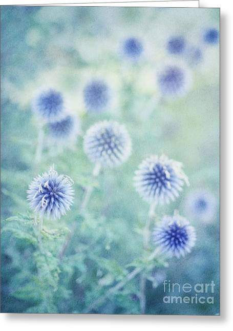Blue Thistles Greeting Cards - Thistle Dreams Greeting Card by Priska Wettstein