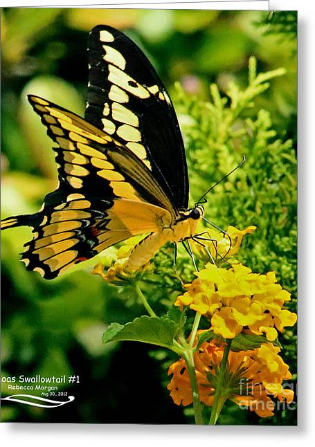 Papilio Thoas Greeting Cards - Thoas Swallowtail #1 Greeting Card by Rebecca Morgan