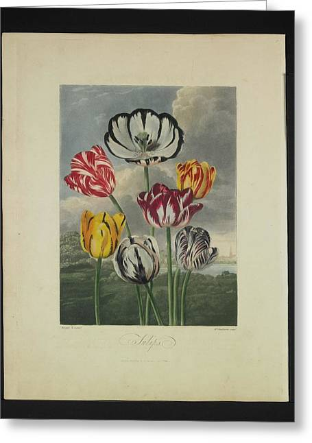Valuable Greeting Cards - Thornton - Tulips Greeting Card by Pat Kempton