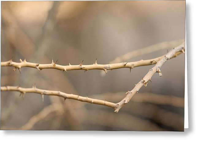 Thorny Desert Plant Inside The Desert Greeting Card by Joel Sartore