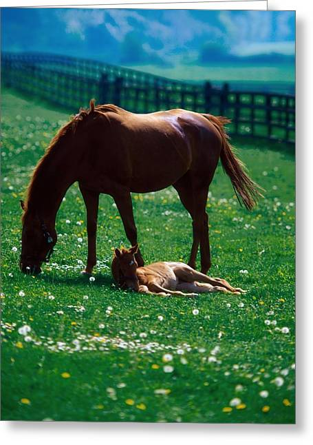 Full Body Greeting Cards - Thoroughbred Mare And Foal, Ireland Greeting Card by The Irish Image Collection