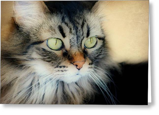 Maine Coon Greeting Cards - Thoughtful Consideration Greeting Card by Fraida Gutovich