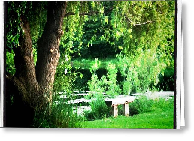 Willow Lake Greeting Cards - Thoughtful Spot Greeting Card by Trish Hale