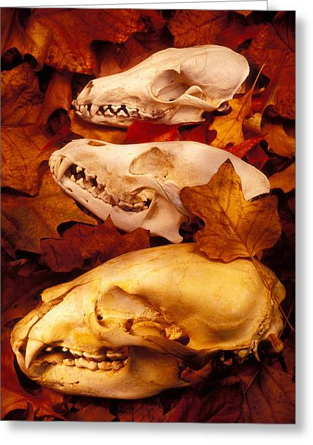Glass Greeting Cards - Three Animal Skulls Greeting Card by Garry Gay