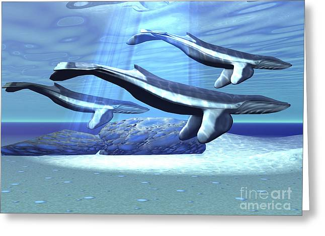 Generate Life Greeting Cards - Three Blue Whales Move Greeting Card by Corey Ford