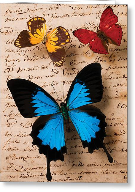 Letters Greeting Cards - Three butterflies Greeting Card by Garry Gay