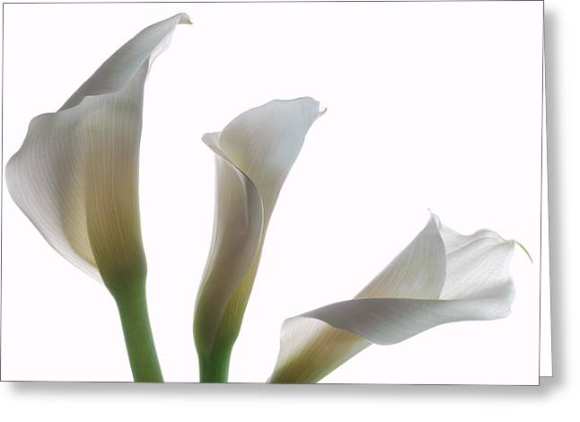 Calla Lily Greeting Cards - Three Calla Lilies Greeting Card by Terence Davis