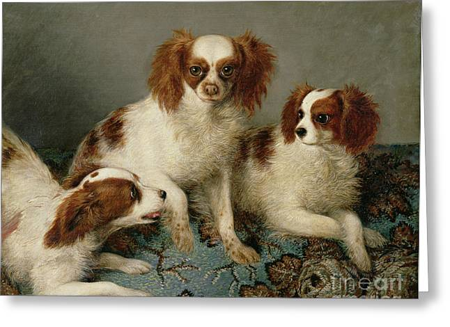 Spaniel Greeting Cards - Three Cavalier King Charles Spaniels on a Rug Greeting Card by English School