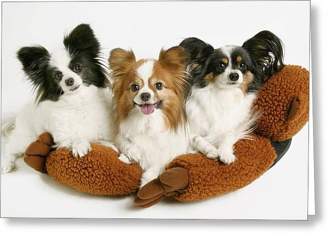Family Love Greeting Cards - Three Dogs Greeting Card by Don Hammond