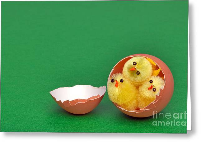Three Chicks Greeting Cards - Three easter chicks in an egg shell Greeting Card by Richard Thomas