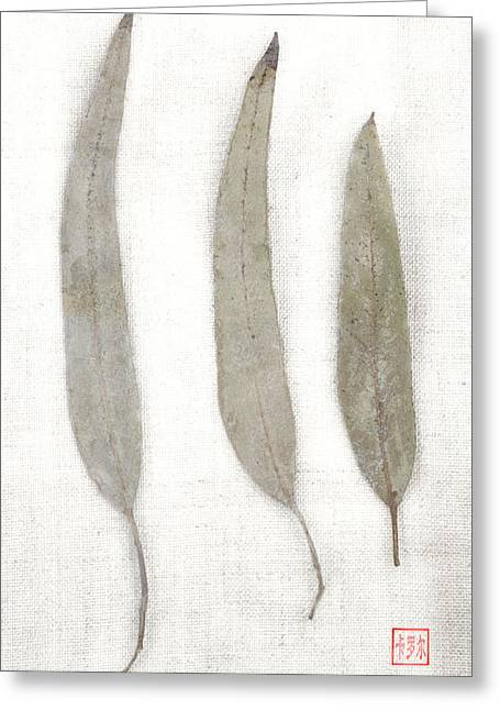Repetition Greeting Cards - Three Eucalyptus Leaves Greeting Card by Carol Leigh