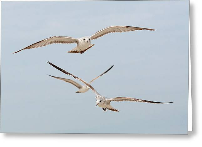 Three Gulls Greeting Card by Kenneth Albin