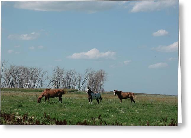Athletic Love Greeting Cards - Three Horse Ranch Greeting Card by Brian  Maloney