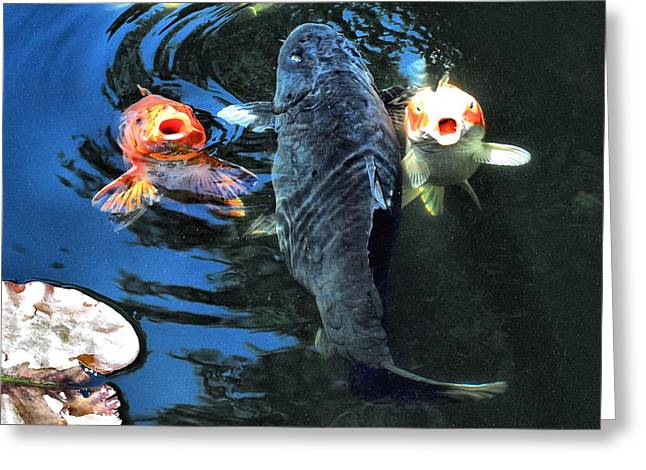 Shebunkin Greeting Cards - Three is crowd Greeting Card by Don Mann