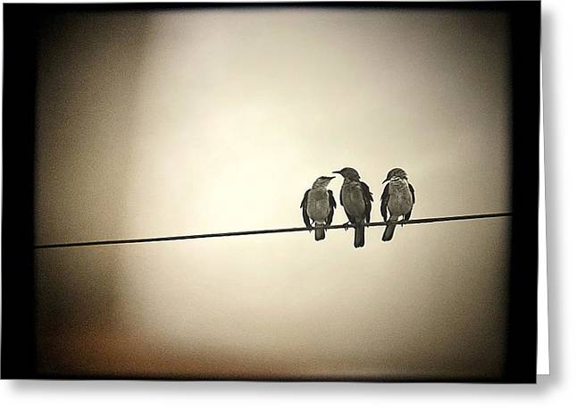 Dreamy Photographs Greeting Cards - Three Little Birds Greeting Card by Trish Mistric