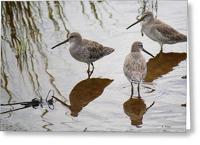 Wildlife Genre Greeting Cards - Three Long Billed Dowitchers Greeting Card by Roena King