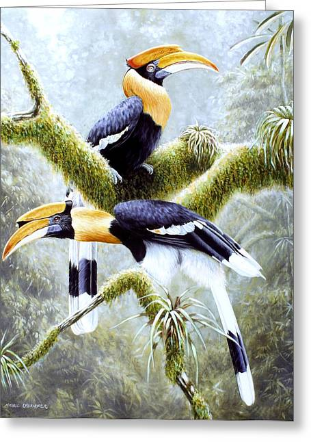 Hornbill Paintings Greeting Cards - Three Greeting Card by Michael Oberhofer