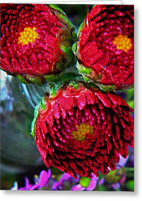 Nature Center Greeting Cards - Three Mums Greeting Card by Chris Berry